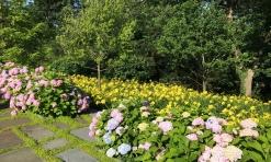 Ward Hydrangeas and daylilies
