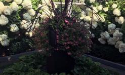 Ward annual pot at box garden
